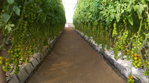 Mapal   Growing Containers Greenhouse Greenhouse Projects