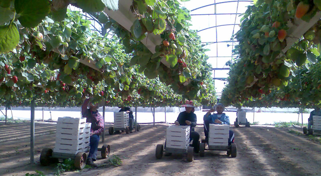 Mapal Horticulture Hydroponics Soilless Drainage Systems